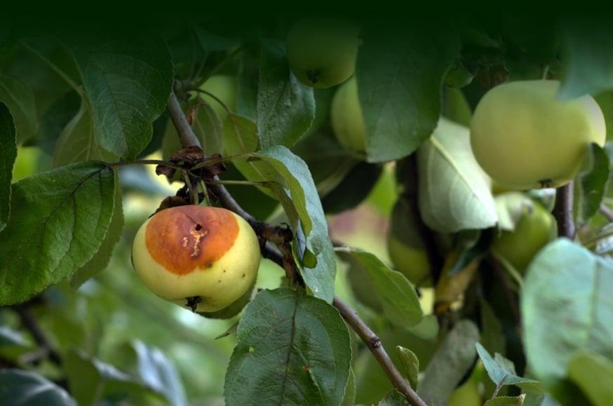 Bad apples, challenging personalities2.jpg