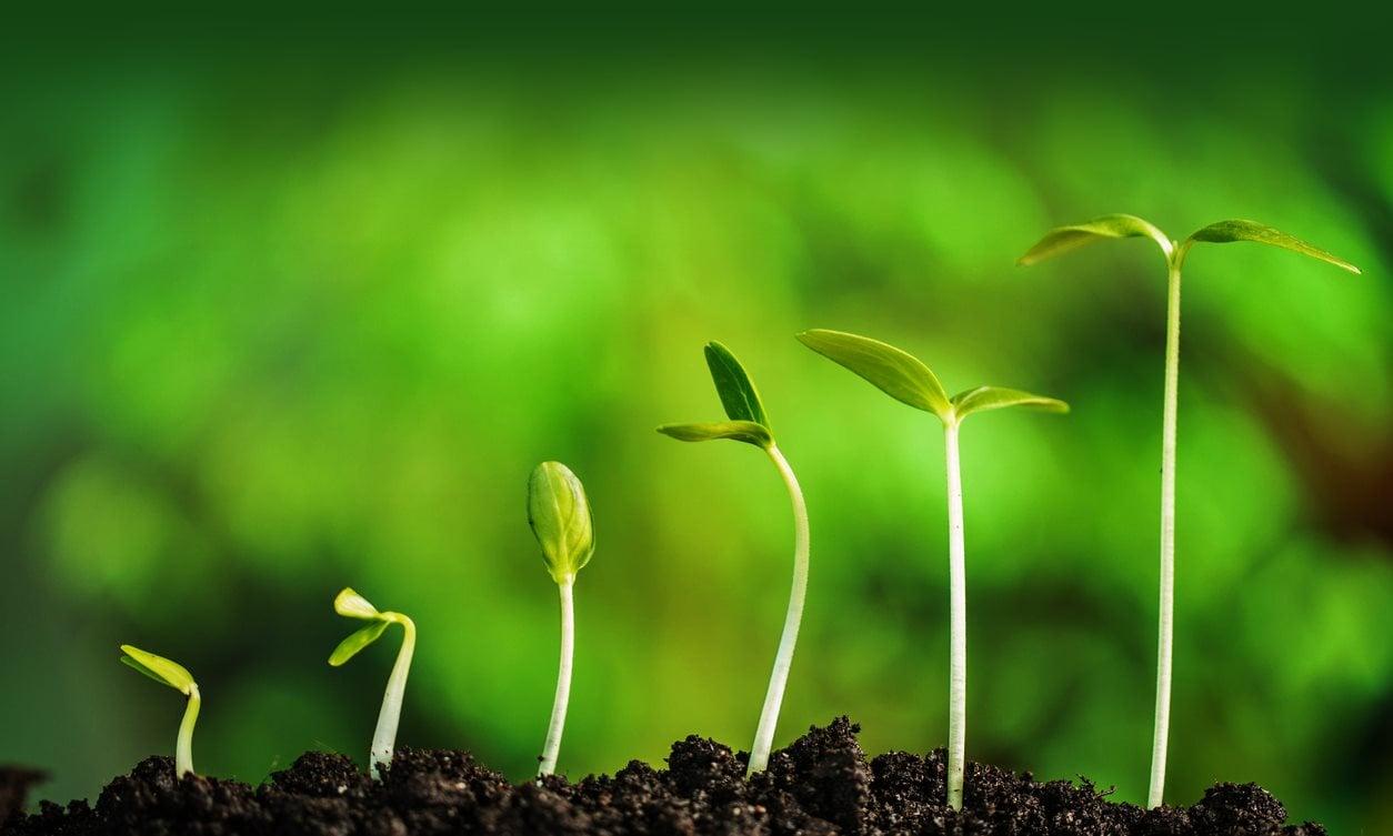 Growing seedlings learning2