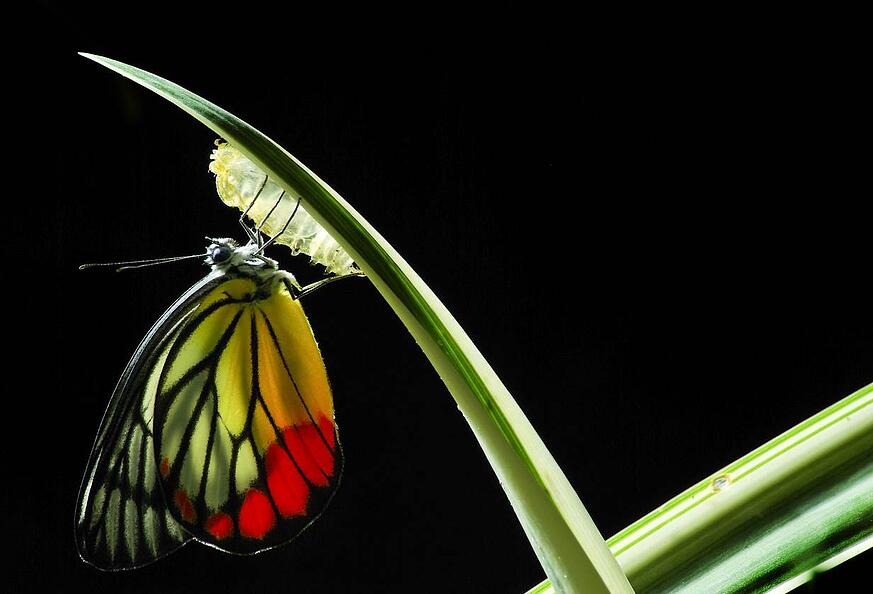 IT purpose is to facilitate change chrysalis